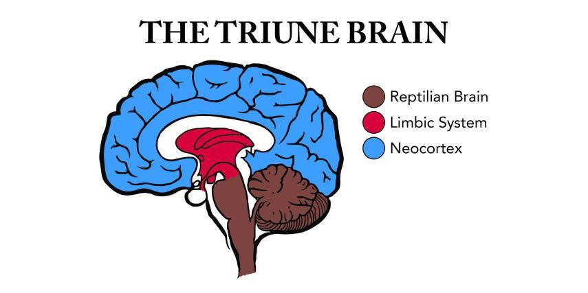 Triune Brain-01_0