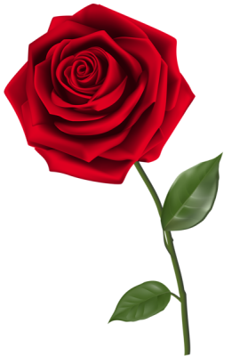 Single_Red_Rose_PNG_Clipart_Image